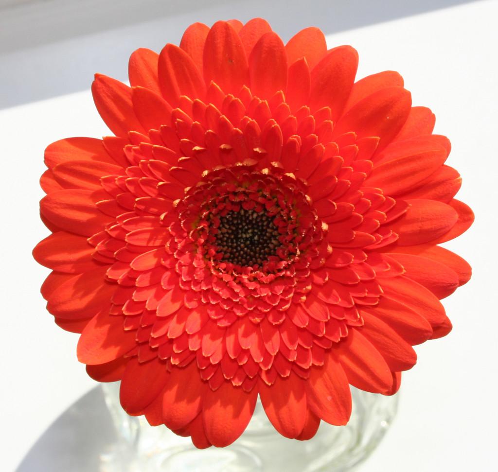 orange-flower-1378854